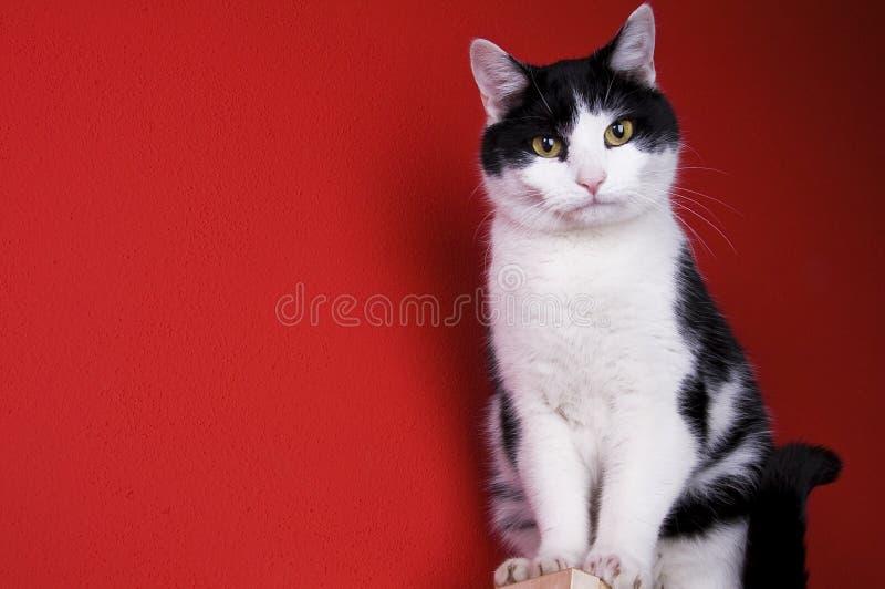 Gato preto e branco de assento fotos de stock