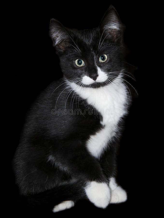 Gato preto e branco do gatinho fotografia de stock royalty free