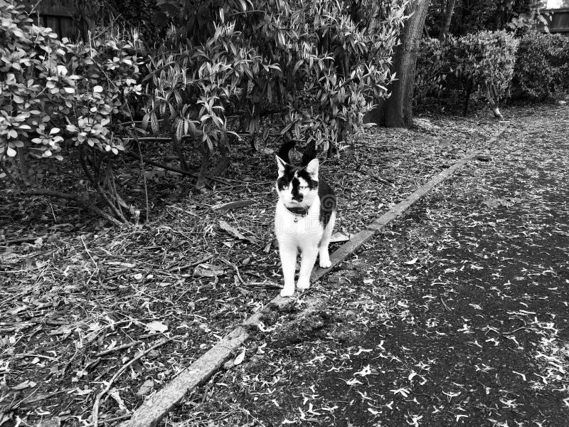Gato preto e branco novo foto de stock