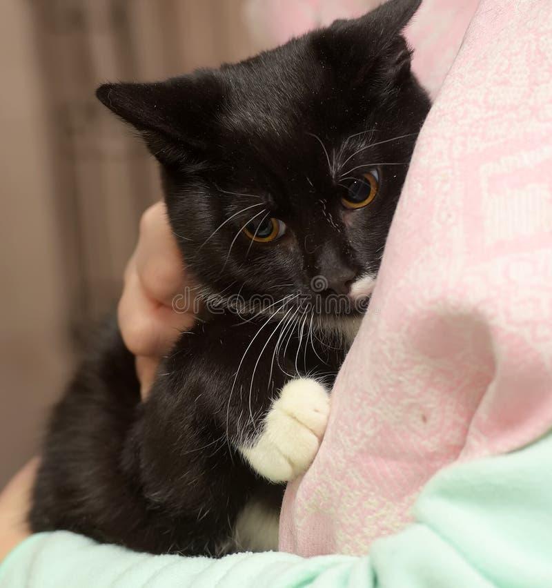Gato preto e branco triste imagens de stock