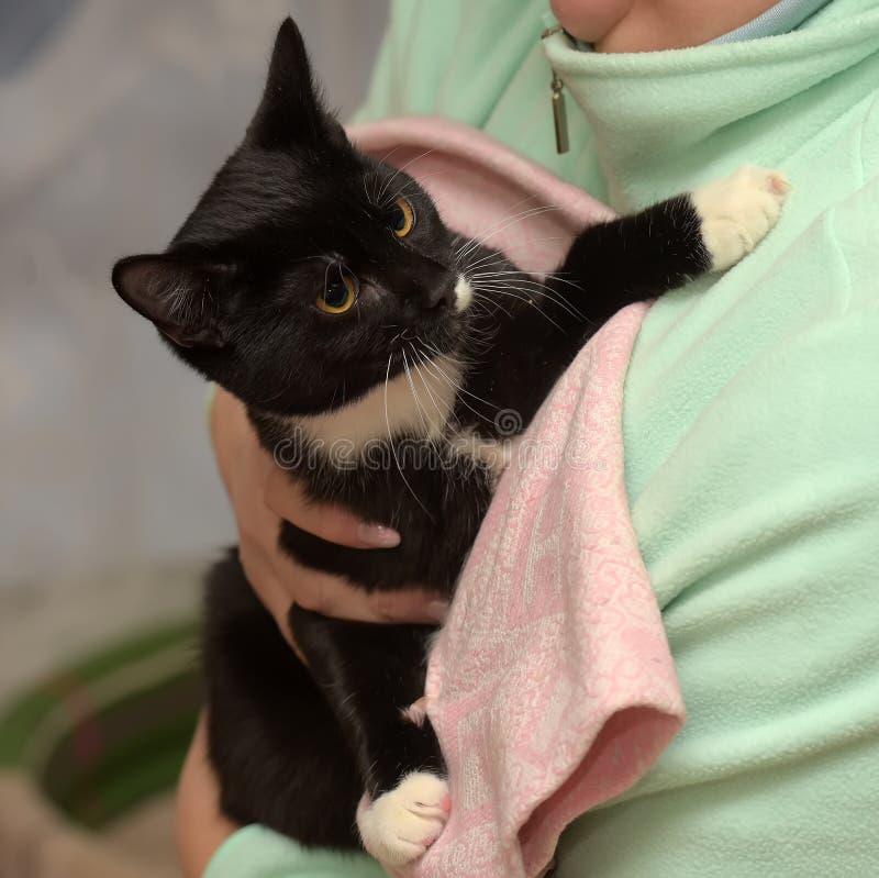 Gato preto e branco triste imagem de stock