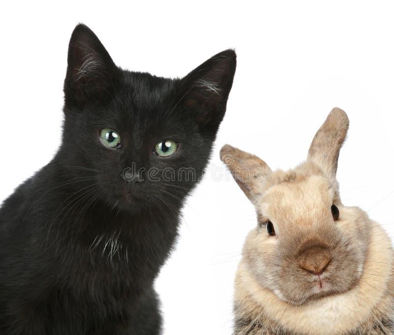 Gato preto e coelho. Retrato do Close-up foto de stock