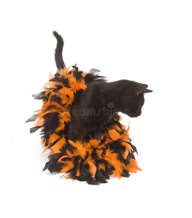 Gato preto e Halloween imagens de stock