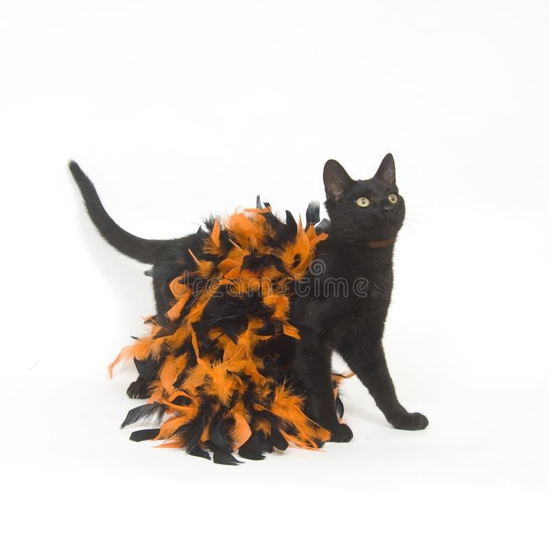 Gato preto e Halloween foto de stock royalty free