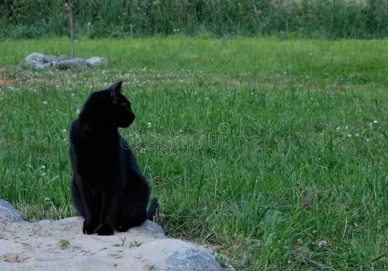 Gato preto gracioso imagem de stock royalty free