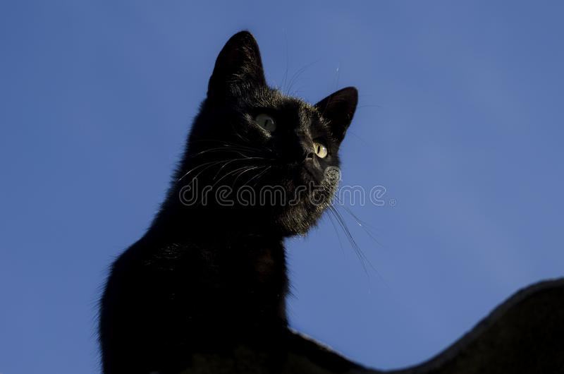 Gato preto iluminado pelo sol brilhante foto de stock