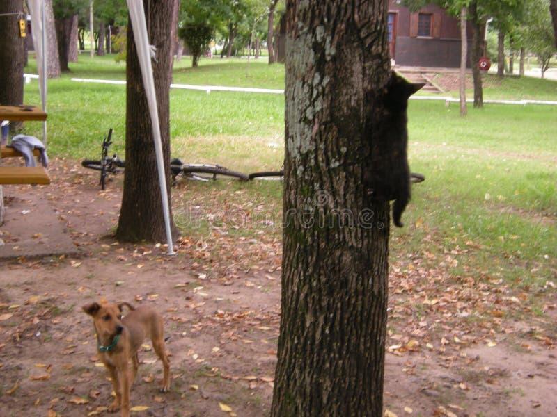 Gato preto a modelar um lindo cachorrinho marrom numa paisagem de parque imagem de stock