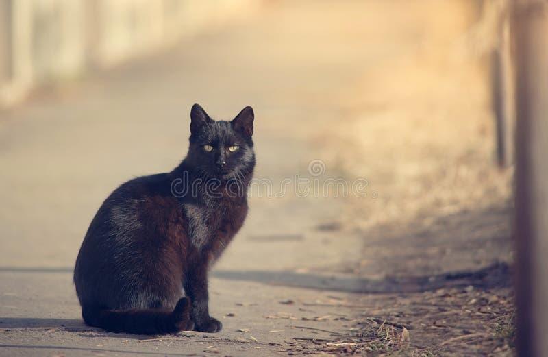 Gato preto na natureza imagem de stock