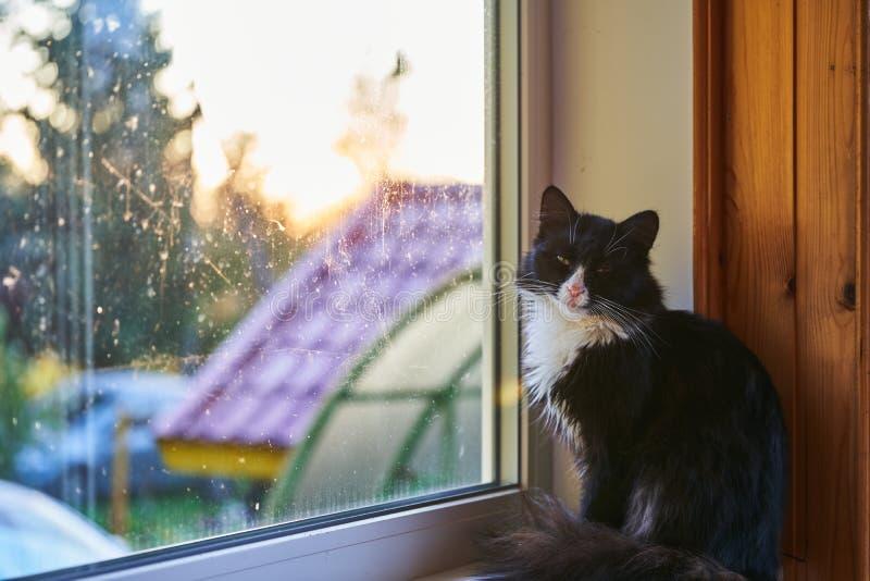 Gato preto na soleira que olha na objetiva imagens de stock
