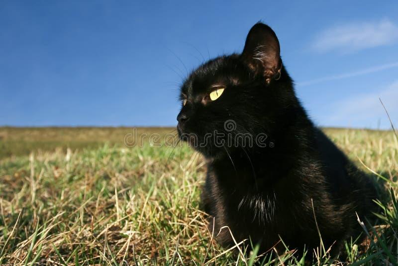 Gato preto no por do sol na grama fotos de stock