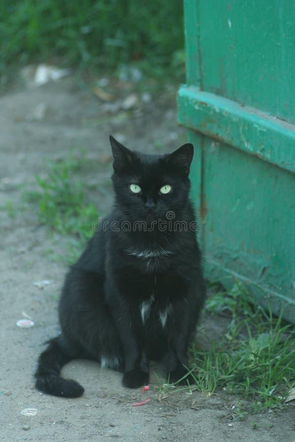 Gato preto pequeno foto de stock royalty free