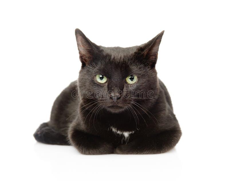 Gato preto que encontra-se na parte dianteira e que olha a câmera Isolado foto de stock royalty free