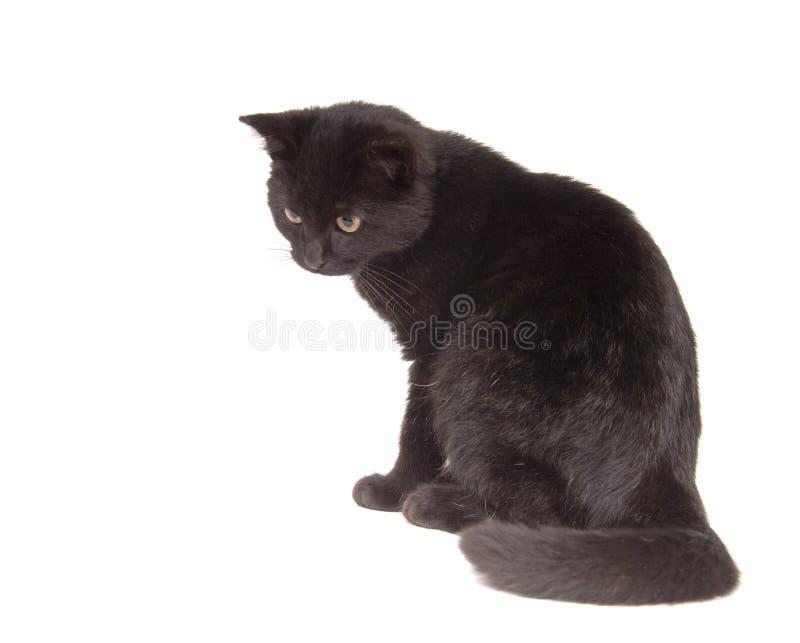 Gato preto que olha abaixo de pronto para atacar imagem de stock