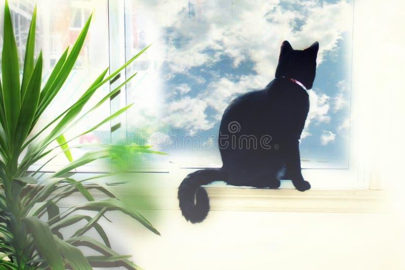 Gato preto que olha para fora a janela imagens de stock royalty free