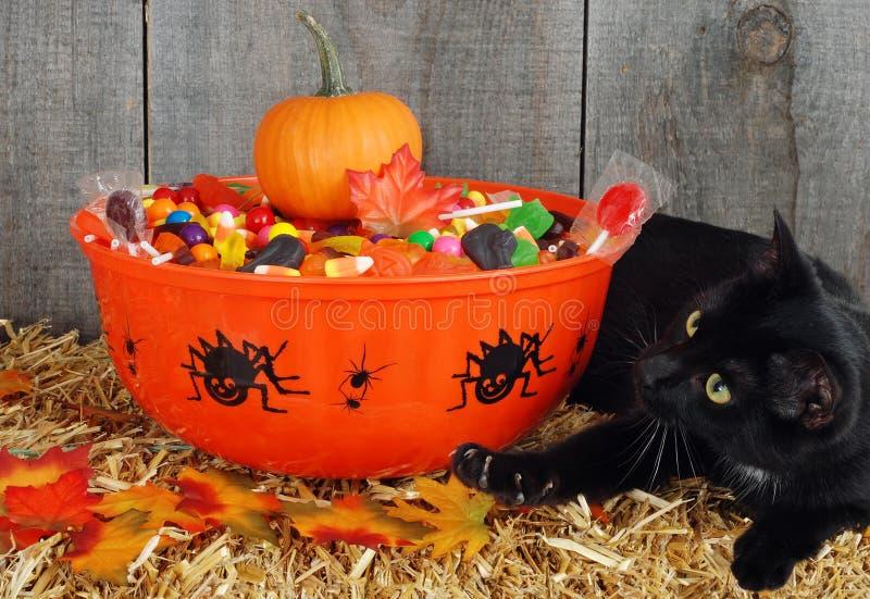 Gato preto que protege doces de Halloween imagem de stock royalty free