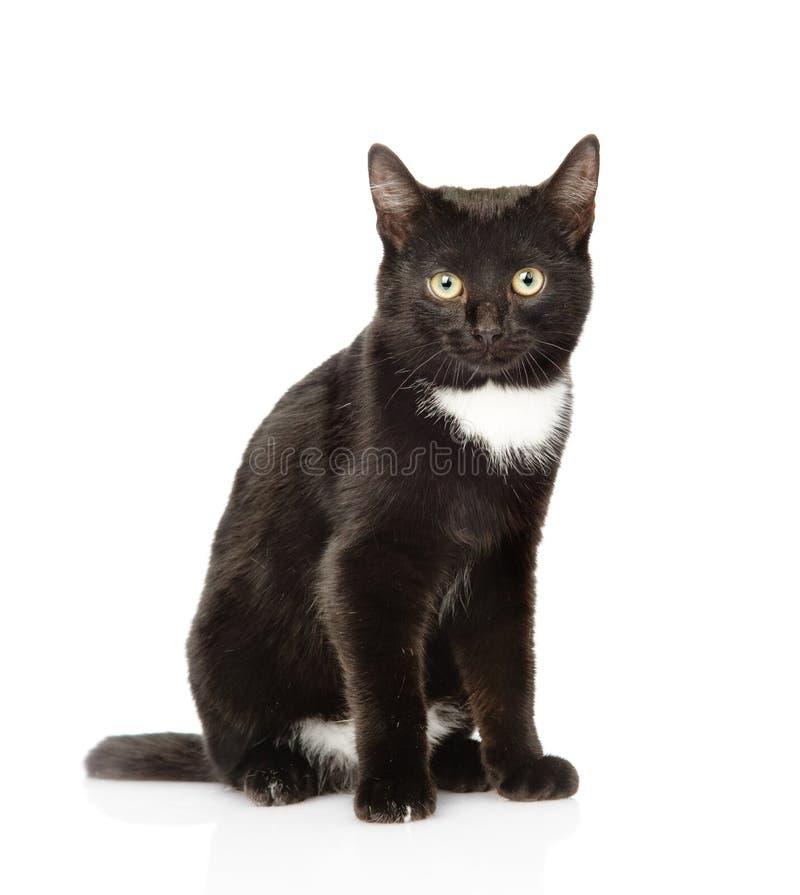 Gato preto que senta-se na parte dianteira e que olha a câmera Isolado fotografia de stock