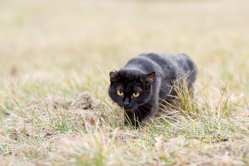 Gato preto que sneaking na grama imagens de stock royalty free