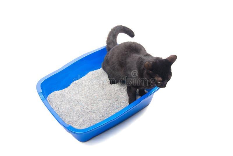 Gato preto que urina em uma caixa de maca azul imagens de stock royalty free
