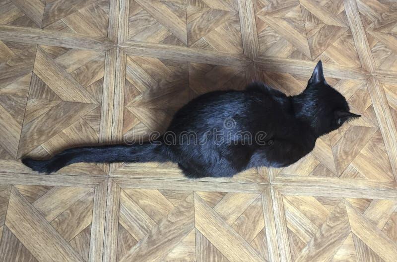 Gato preto superior - arriba do desde do negro do gato imagens de stock