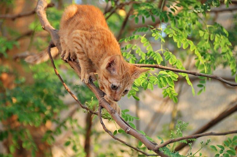 Gato pronto para saltar da árvore imagens de stock
