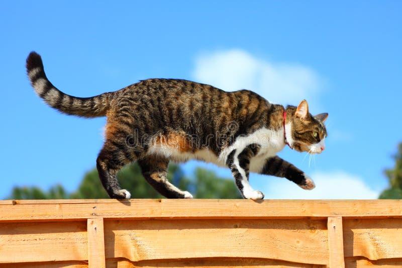 Gato que anda na cerca fotografia de stock