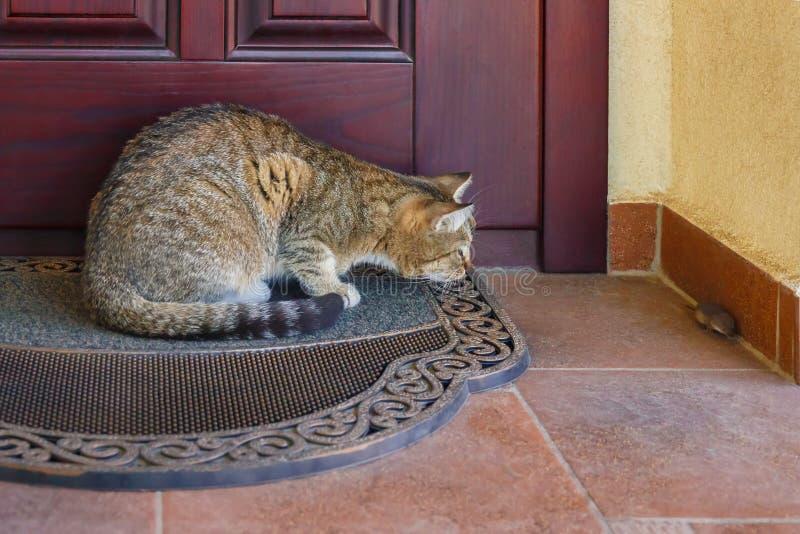 Gato que caça um rato fotos de stock