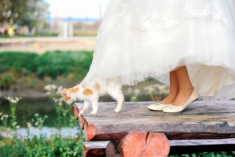 Gato que camina debajo del vestido de la novia imagen de archivo