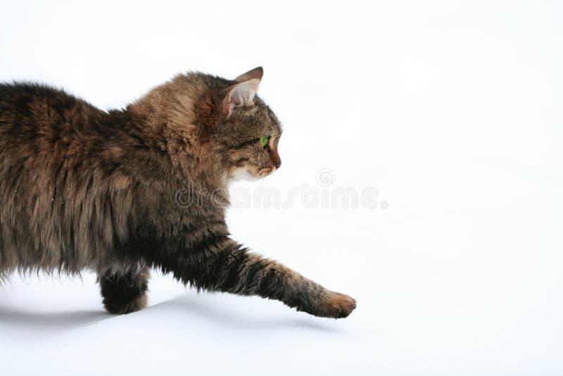 Gato que camina en la nieve fotos de archivo