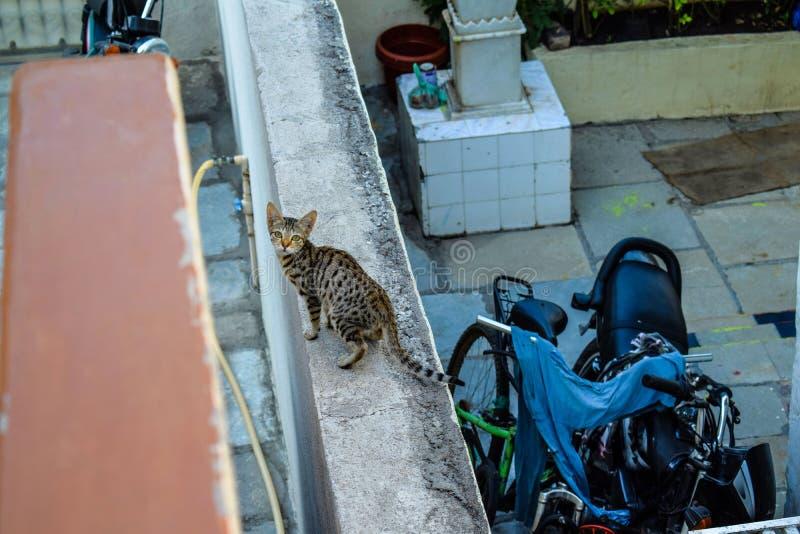 Gato que camina en la pared y que presenta para la imagen perfecta fotografía de archivo