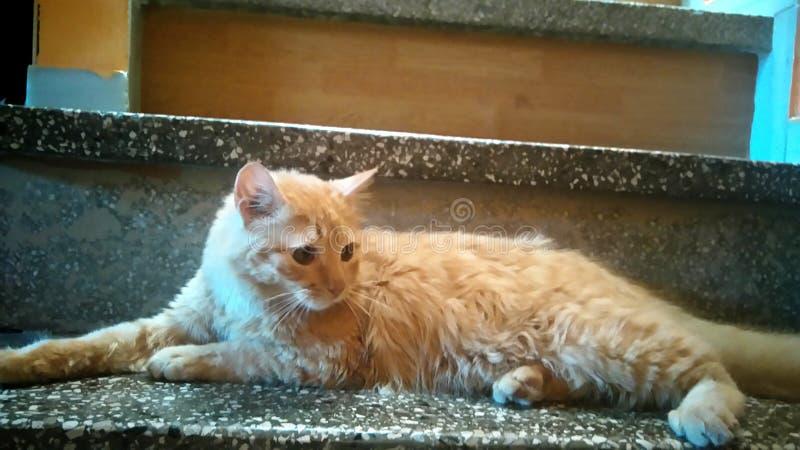 Gato que coloca nas escadas imagem de stock royalty free
