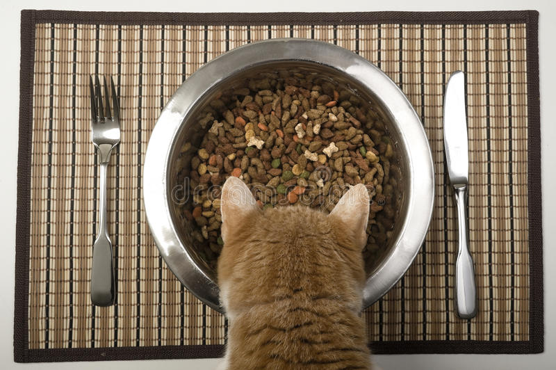 Gato que come da bacia de prata fotografia de stock