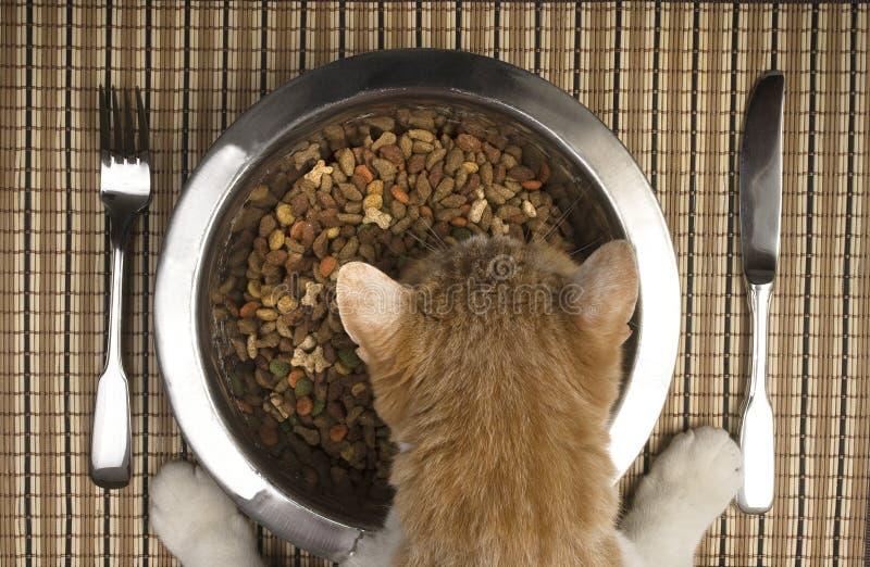 Gato que come da bacia de prata fotografia de stock royalty free