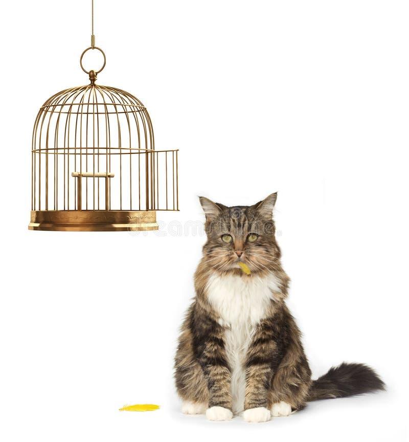 Gato que comeu o canário fotografia de stock