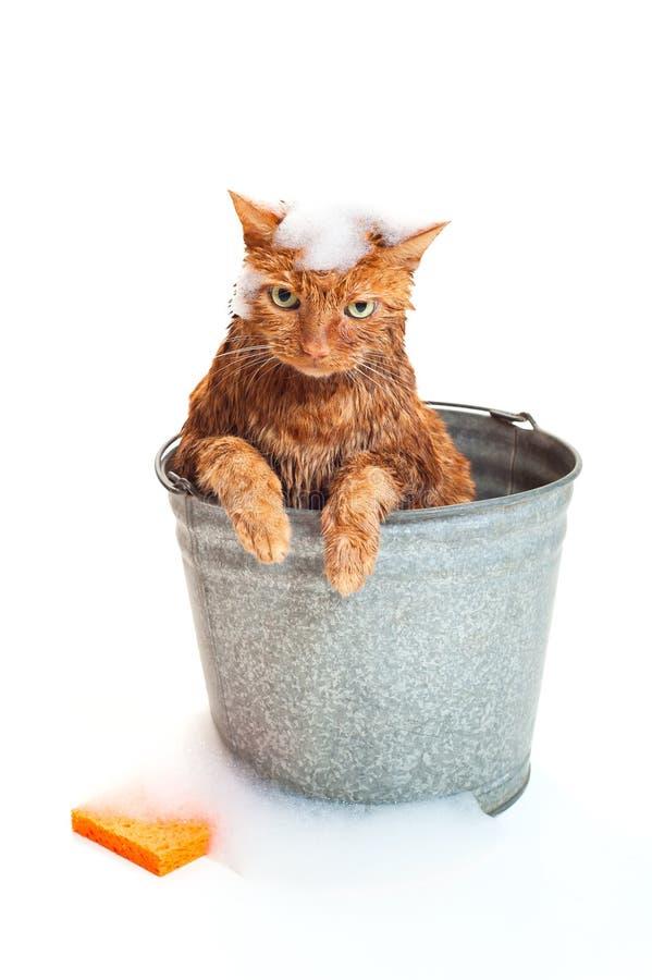 Gato que consigue un baño imagen de archivo