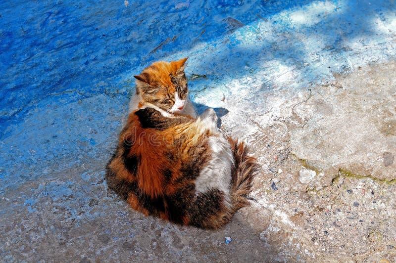 Gato que descansa en media sombra foto de archivo