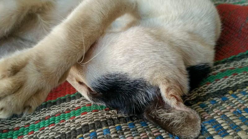 Gato que dorme bem imagem de stock