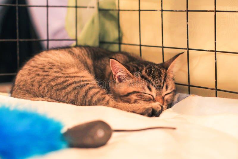 Gato que dorme em uma gaiola no abrigo imagens de stock royalty free