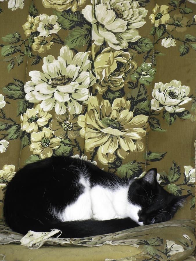 Gato que dorme na cadeira das avós fotografia de stock royalty free