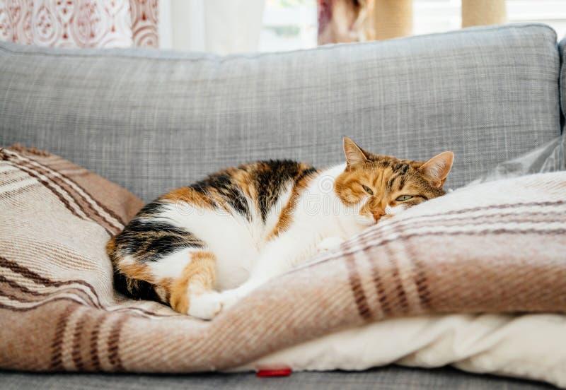 Gato que duerme en el sofá fotos de archivo