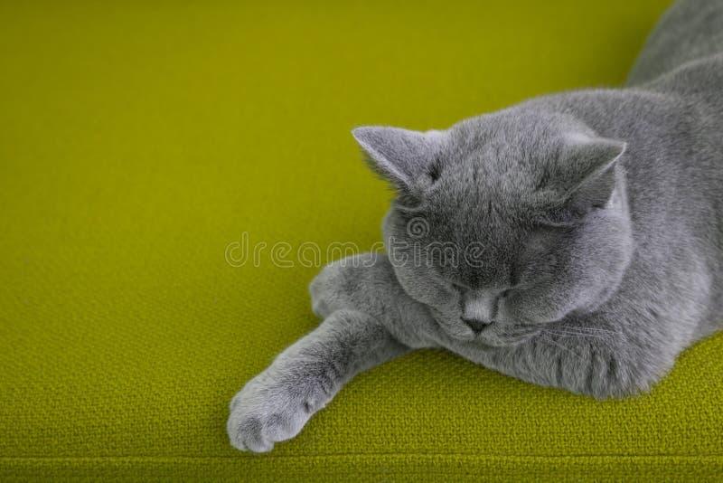 Gato que duerme en el sofá verde imagen de archivo