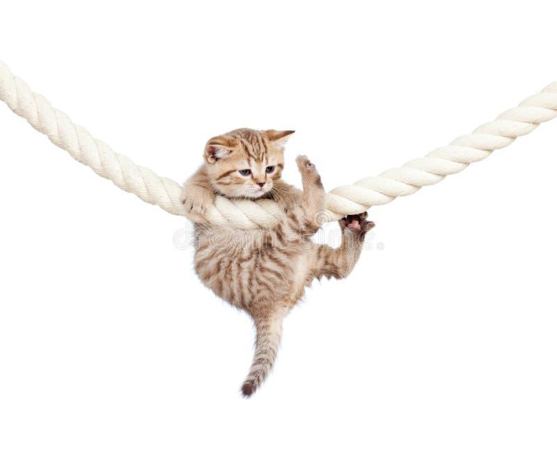 Gato que embreia na corda isolada no fundo branco foto de stock royalty free