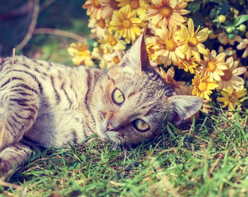 Gato que encontra-se no jardim imagem de stock