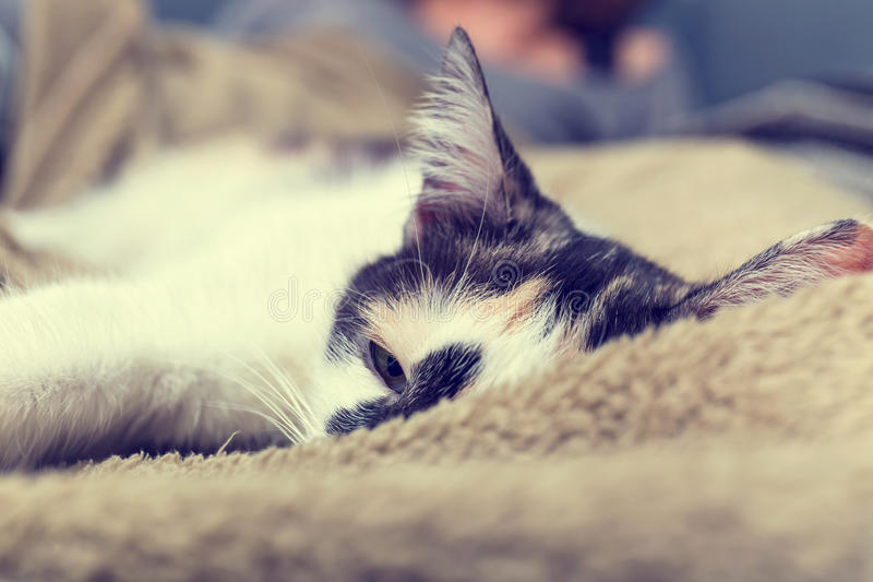 Gato que encontra-se no sofá fotos de stock royalty free