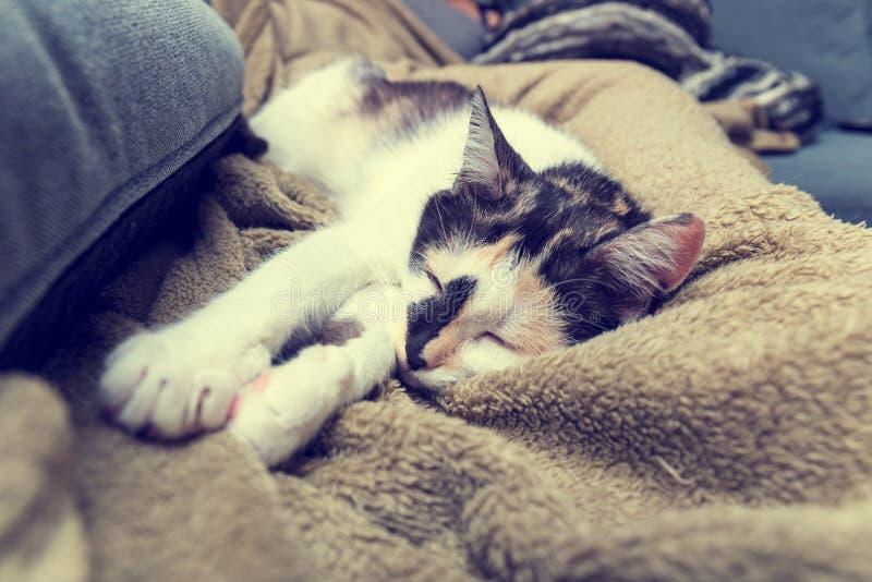 Gato que encontra-se no sofá foto de stock