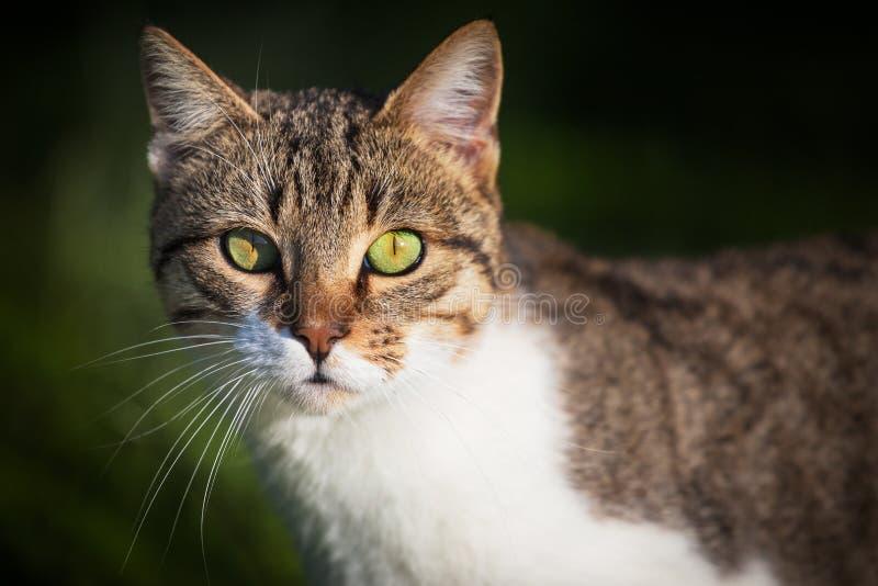 Gato que espera un poco de comida imagen de archivo libre de regalías