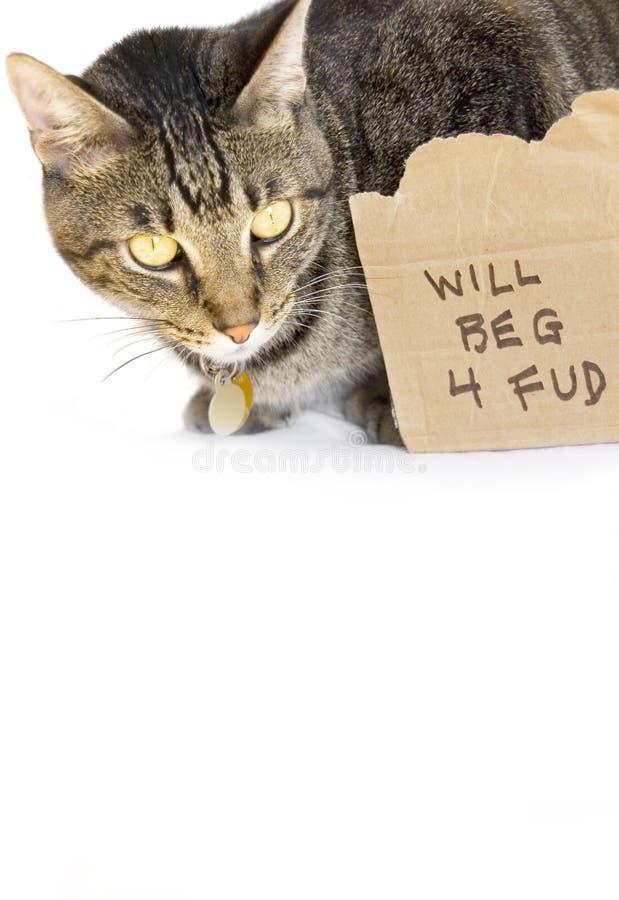 Gato que implora pelo alimento
