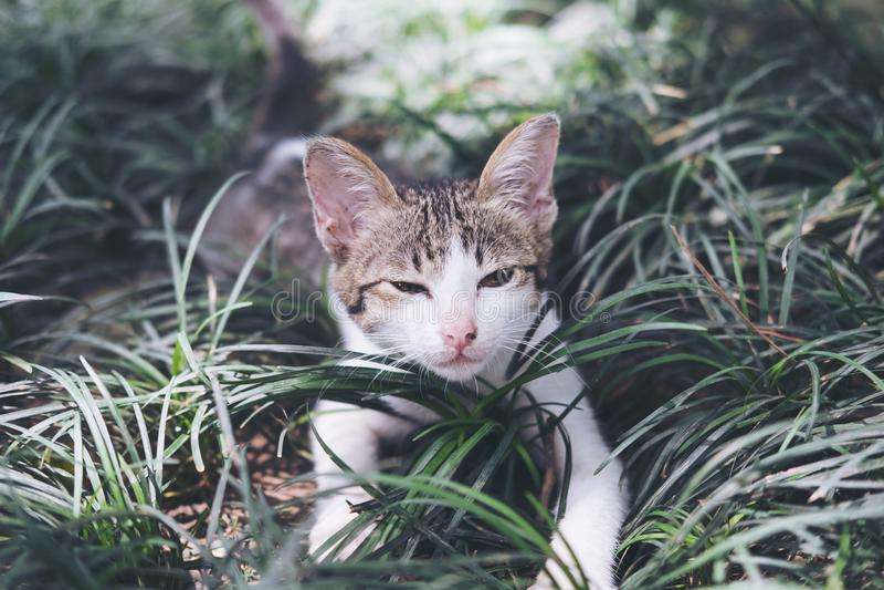 Gato que joga ao redor em um campo imagens de stock royalty free