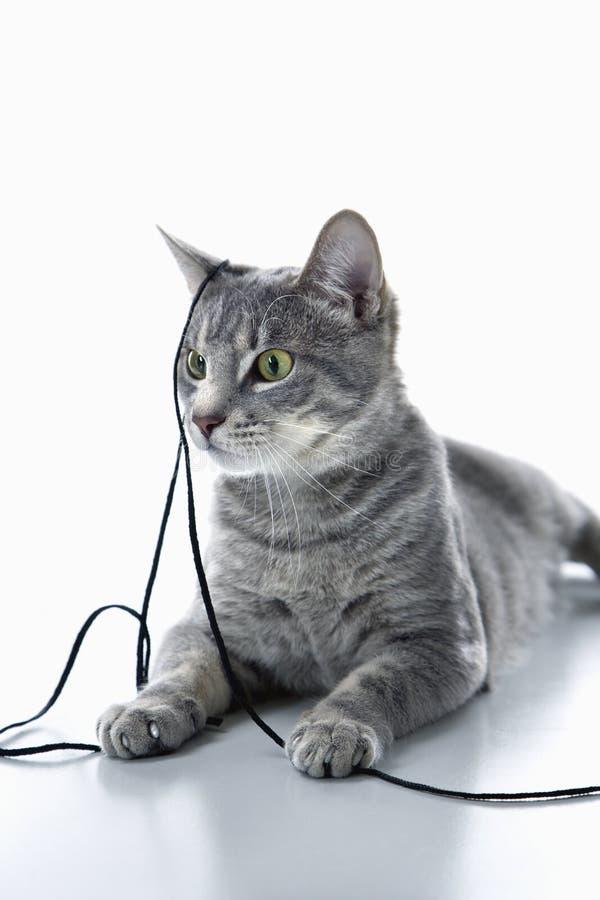 Gato que joga com corda. imagem de stock royalty free