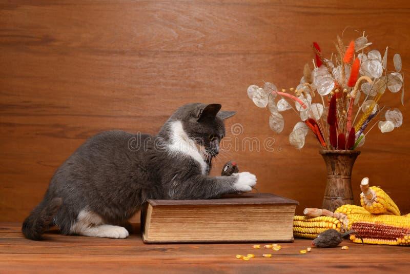 Gato que joga com um rato do luxuoso fotos de stock royalty free