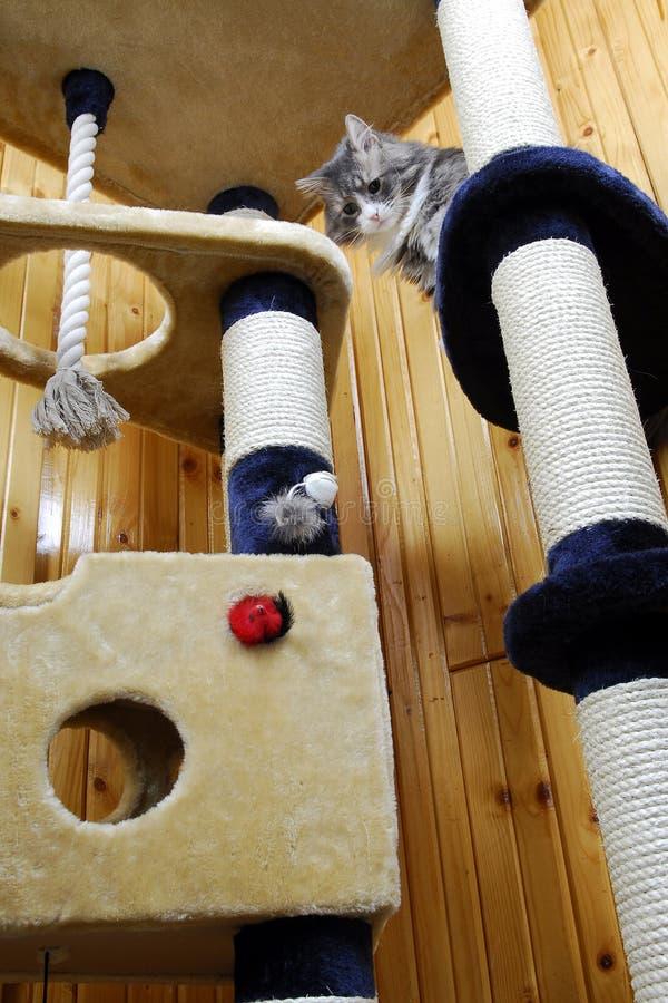 Gato que joga em um cat-house enorme imagem de stock